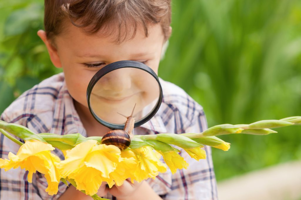 Child looking at a butterfly outside